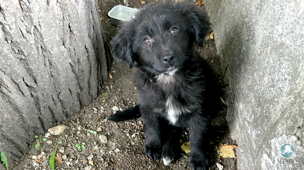 This puppy Meesha was found on the streets of Jajce with a leg injury, brought to the vet, and eventually placed in a new home.