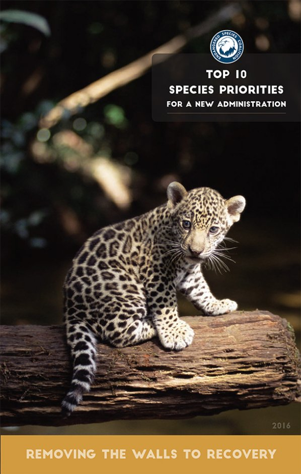 "Endangered Species Coalition, of which IFAW is a member group, released today a ""Top Ten"" list of imperiled species in need of strong conservation measures."