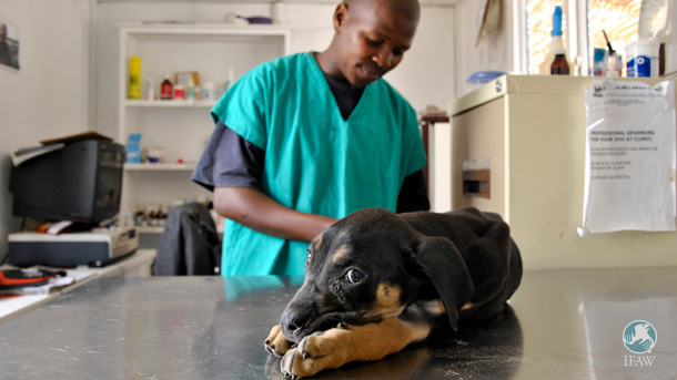 The author with one of his patients at the Mdzananda Animal Clinic in Khayelitsha.