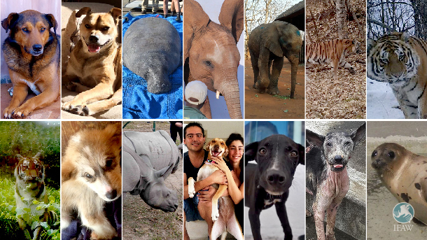 The faces of the many animals we've saved in 2016.