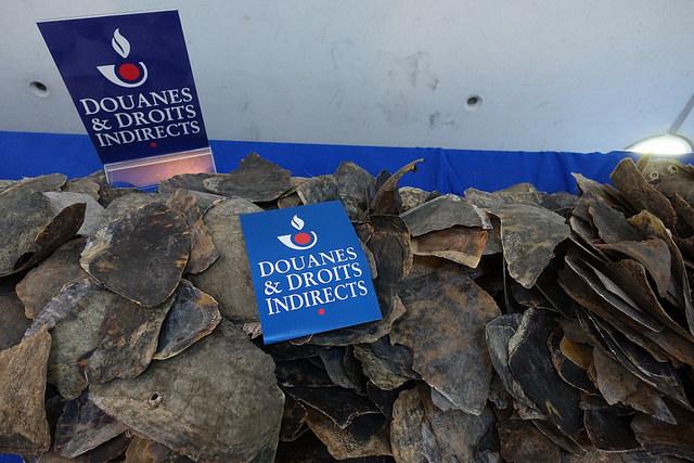 De Franse douane onderschepte deze maand een halve ton schilden van bedreigde zeeschildpadden. De smokkelwaar werd ontdekt op het vliegveld Roissy-Charles de Gaulle.
