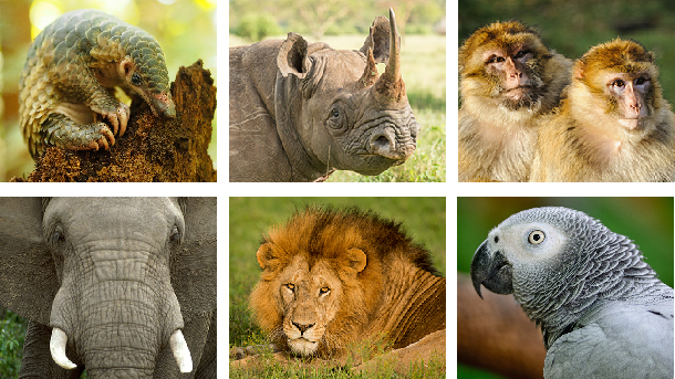 india s diverse wildlife and their conservation Threats to species are principally due to a decline in the areas of their habitats,   of legislation such as the wildlife protection act of 1972 and its various.