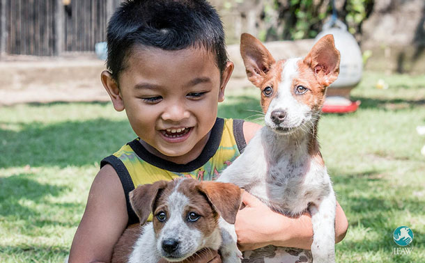 Take part in the Big Give Christmas Challenge and help save dogs in Bali