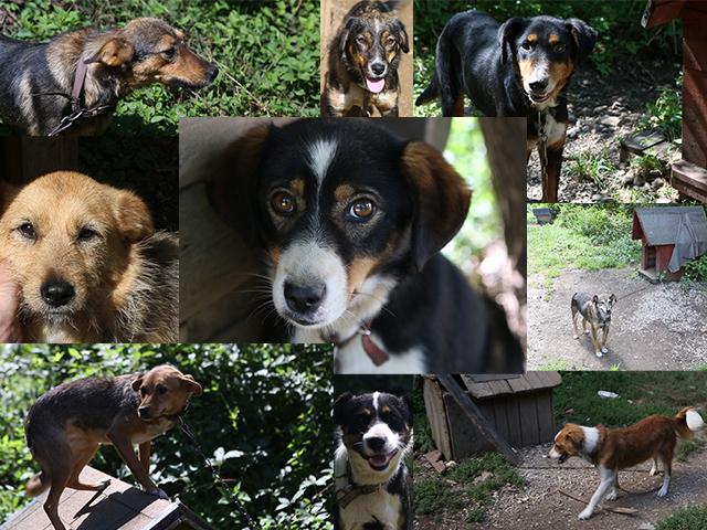 Mit Ihrer Hilfe wollen wir diese und viele andere Hunde in Bosnien retten. Sie brauchen dringend Pflegefamilien und ein neues Zuhause in Deutschland.