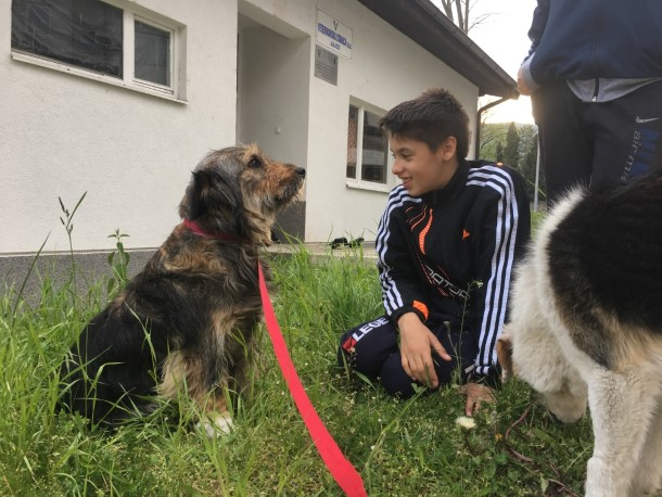 Children interact with local dogs in Bosnia.