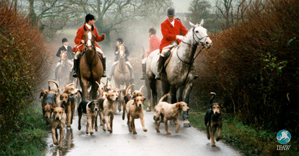 Link between bovineTB and hunting hounds?