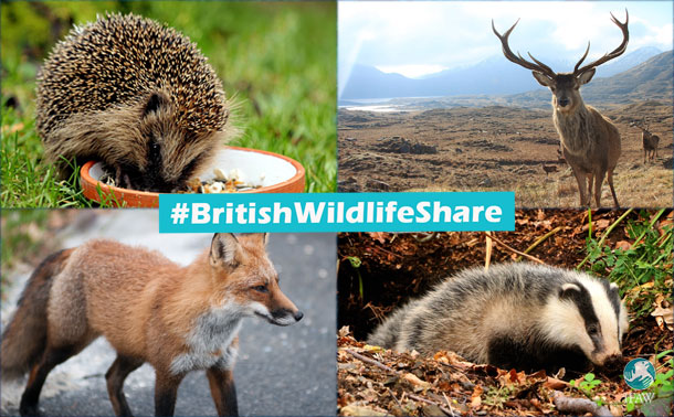 Celebrate your love for UK wildlife this summer!