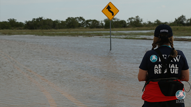 An IFAW Disaster Response team member looks out over a flooded road after Hurricane Harvey.