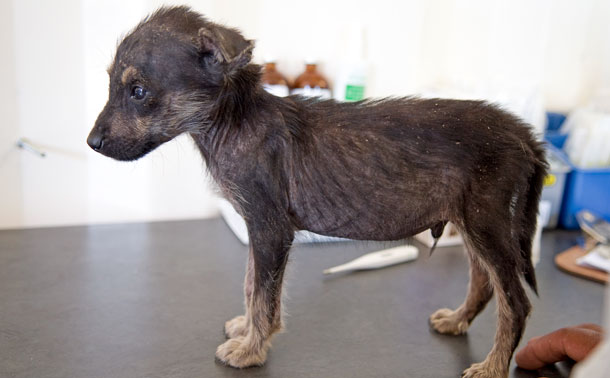 A victim of puppy breeding in the UK