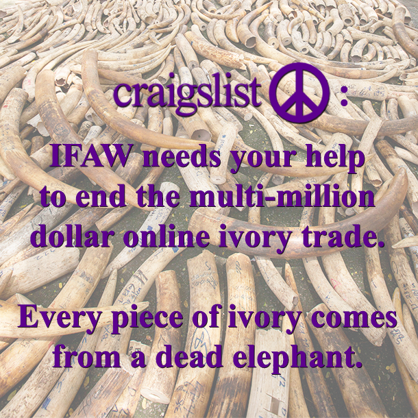 Let Craigslist know you care about elephants! Download this image and share it on your social networks!