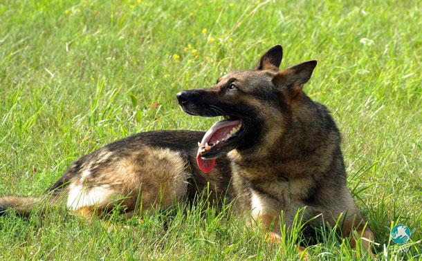 Sentences for animal cruelty increase