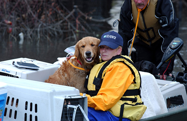 IFAW helped rescue, care and transport 7,000 animals following Hurricane Katrina.  Sept.  1, 2005 ©IFAW/S. Cook