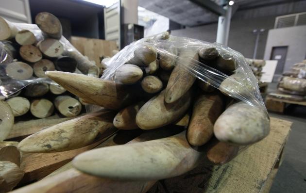 Endlich sieht es so aus, als ob ein britisches Handelsverbot für Elfenbein Wirklichkeit werden könnte