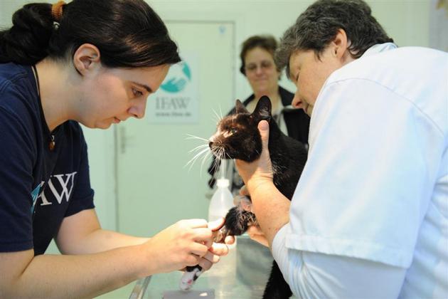 Katzensprechstunde beim IFAW Tierarztprojekt Berlin