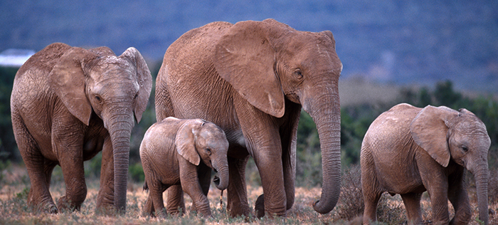 UK ivory ban - your questions answered