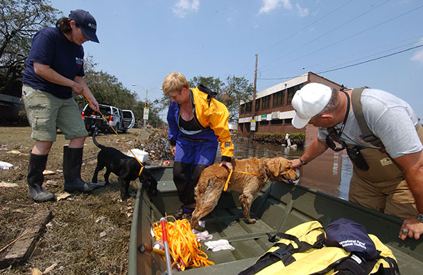 The author on left brings rescued dogs to the boat during Hurricane Katrina. Sept. 10, 2005 ©IFAW/S. Cook