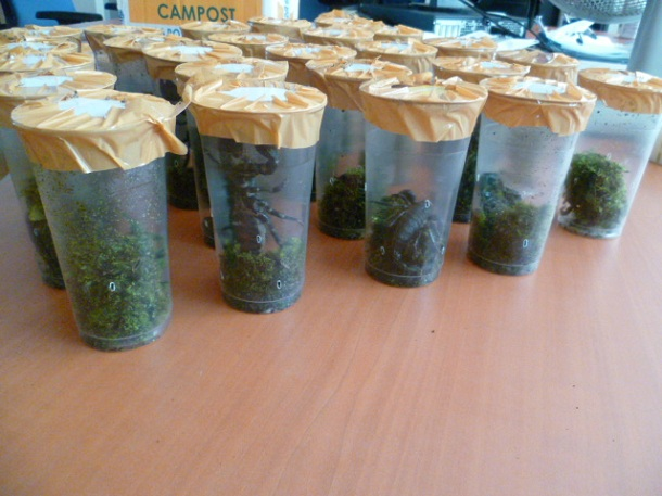 Some scorpions seized by Customs on 18 and 22 September 2015. © French Customs