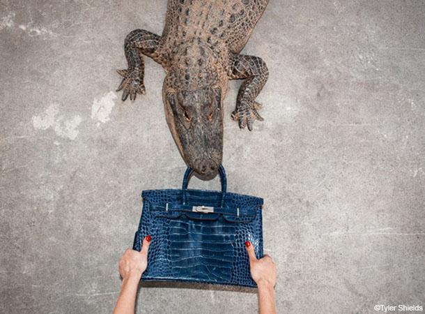 L'enquête menée par PETA sur l'élevage d'alligators au Texas et l'élevage de crocodiles au Zimbabwe révèle les conditions de vie et d'abattage pitoyables
