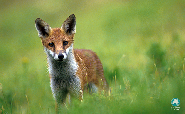 Scotland's first hunting conviction