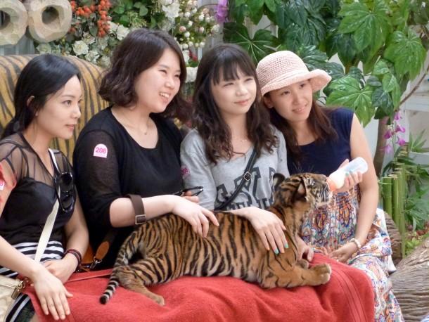Toeristen poseren met een tijgerwelpje in Tiger Zoo, Sriracha, Thailand.