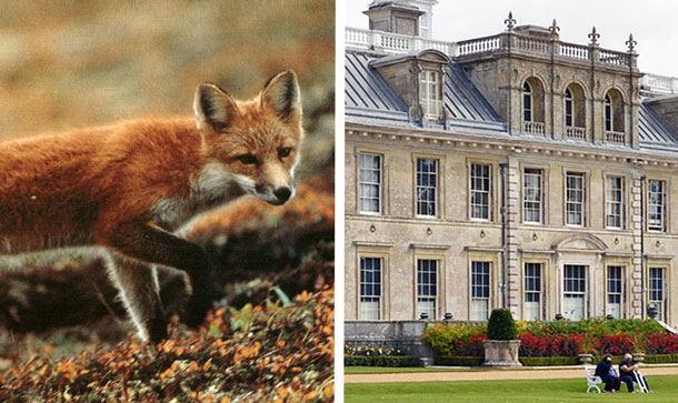 Trail hunting and the National Trust