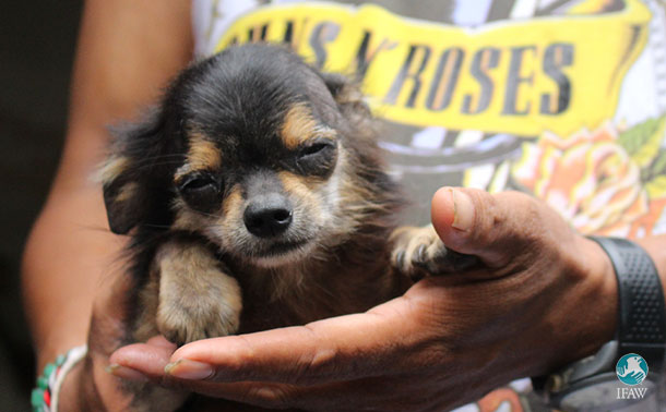 IFAW's Bali dogs project is helping animals like Wira