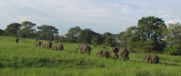Orphan Herd with Tafika and Chamilandu.