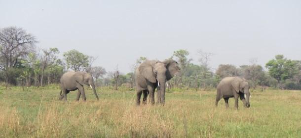 Chodoba, Batoka et Kafue en liberté en octobre.
