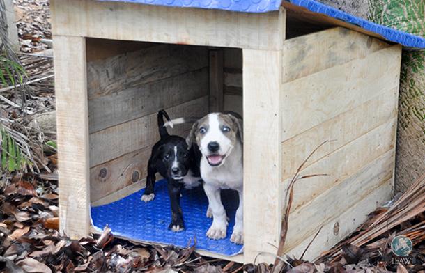 Deze puppy's helpen bedreigde diersoorten te beschermen
