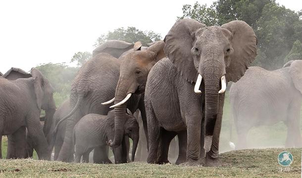 Een familie olifanten trekt door Amboseli National Park in Kenia.
