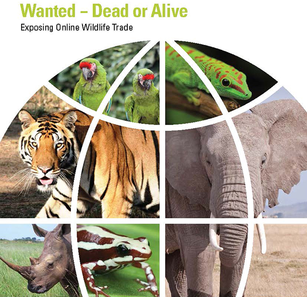 Wanted – Dead or Alive: Exposing Online Wildlife Trade found more than 30,000 endangered and threated live wild animals and items made from their body parts available for sale across 280 online marketplaces.