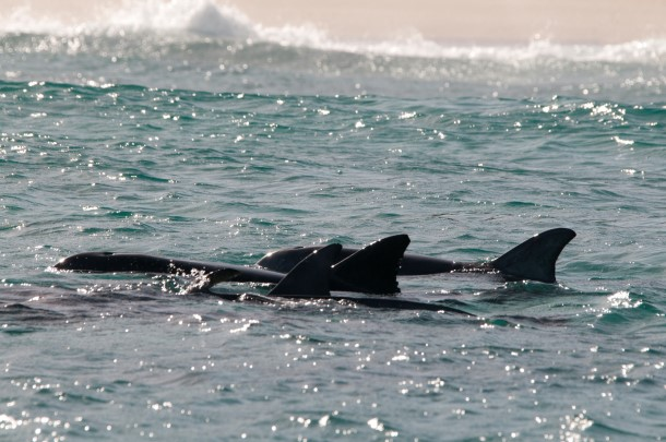 IFAW has been particularly concerned about the threats facing marine life off Kangaroo Island,.