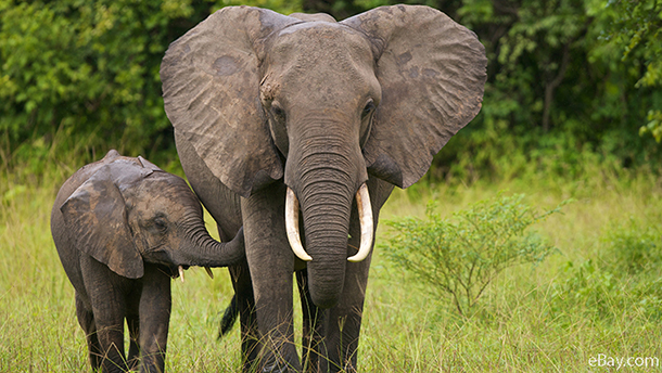 african elephant and its baby
