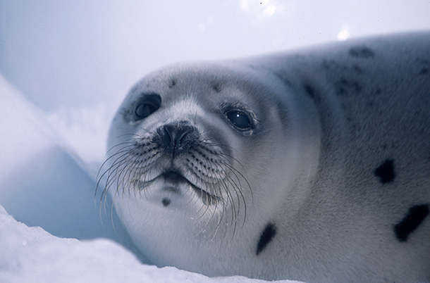 The European Parliament voted to support revisions to the EU regulation on the trade in seal products meeting WTO rules