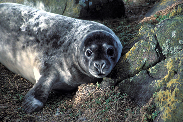 Canada's obsession with killing seals these days is truly baffling.