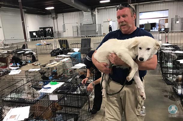 Nous travaillons avec American Humane dans l'espoir de réunir plus de 200 chiens et chats avec leur famille.