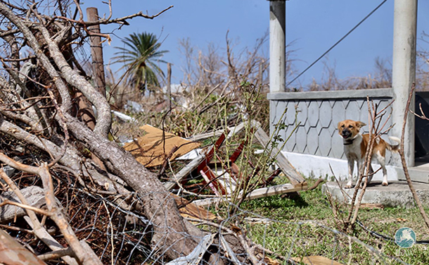 Barbuda Environment officer Alexander Desuza dog after hurricane irma