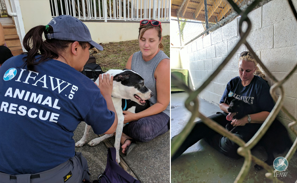 St John Animal Care Center during hurricane irma response