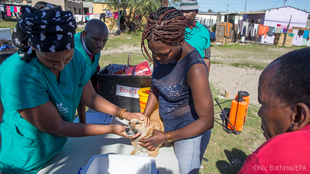 mobile animal clinic helps a dog in capetown south africa