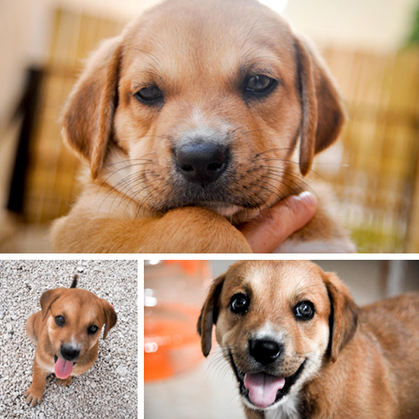 Vote for your favorite puppy name or suggest one of your own!