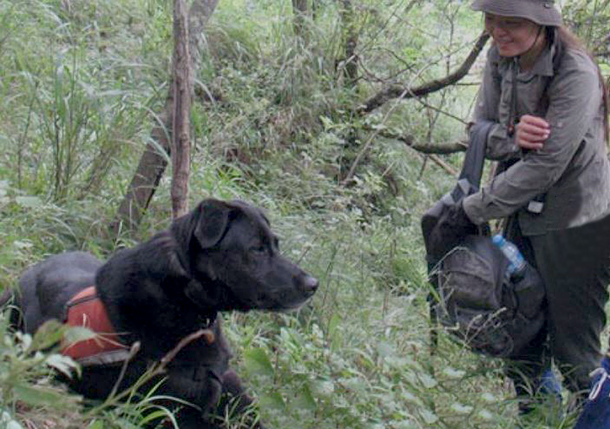 Rescues 2the Rescue helps place high-energy shelter dogs with conservation detection dog organizations and trainers.