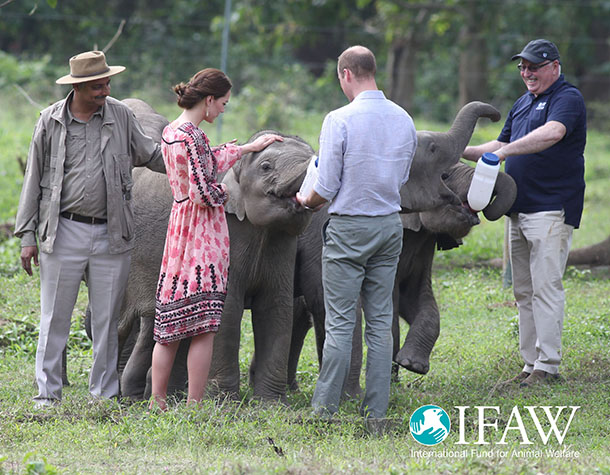 The Duke and Duchess of Cambridge enjoy feeding orphaned elephants at the IFAW-Wildlife Trust of India Centre for Wildlife Rehabilitation and Conservation
