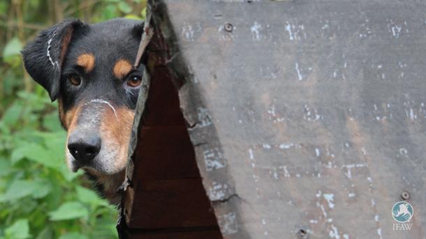 Picco était enchaîné à sa niche à Jajce, et n'était pas vraiment amical quand nous l'avons vu pour la première fois.