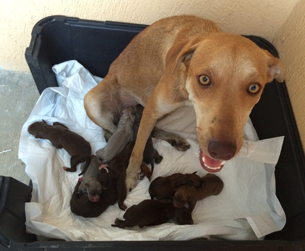 Unfortunately, Kiki was not receiving high-quality food, and she lacked enough milk for all ten of her puppies.