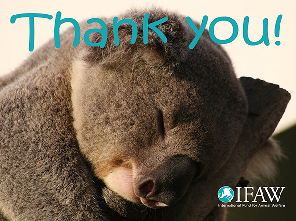 Thank you to everyone around the world who took time to help the koalas!