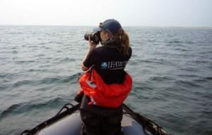 De schrijfster neemt foto's van de walvissen.