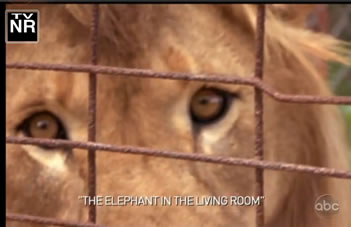 """Click here to watch ABC's hour-long 20/20 special """"When Animals Strike Back""""."""