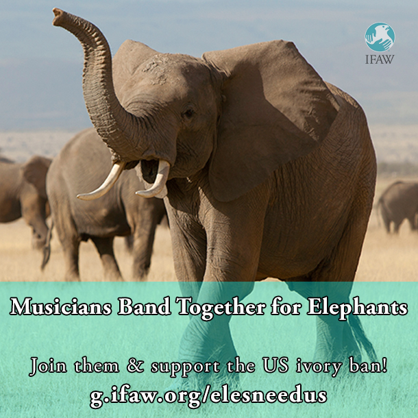 Right click, save this image and share to help save elephants!