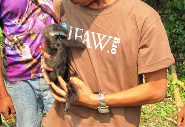 IFAW-WTI vet Nupur with the infant of the family.
