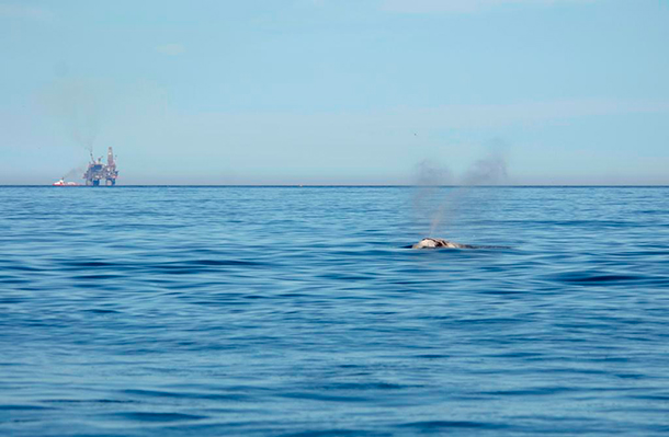 An oil rig can be seen billowing smoke in the distance as a whale surfaces in the foreground.